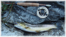 Trout fishing in Wyoming and Colorado. Guided fishing trips